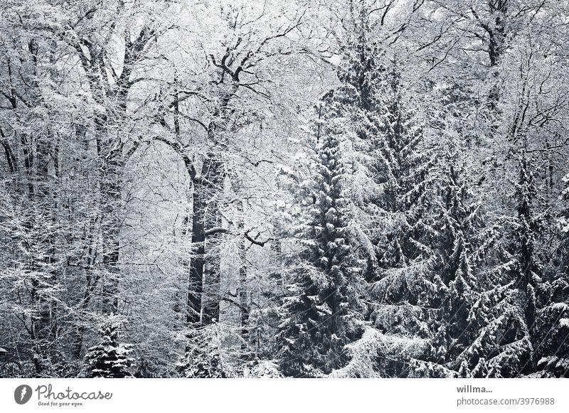 blick aus meinem fenster. wohnen im grünen. Winter Wald Winterwald verschneit Bäume winterlich Schnee schneebedeckt Natur Winterstimmung Wintertag