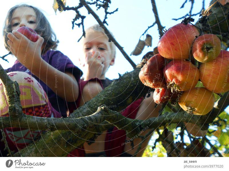 Apfelernte Apfelbaum Äpfel Kindheit essen Natur klettern ernten genießen Strumpfhose bunt Froschperspektive Frucht Farbfoto Außenaufnahme Baum Garten Gesundheit