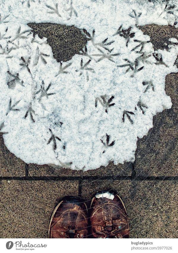 Schneewalzer der Stadttauben Taube Tauben stadttaube Haustaube Vögel Vogel Fußspuren Spuren Fußabdrücke fussabdruecke im schnee Schuhe Wanderschuhe Winter