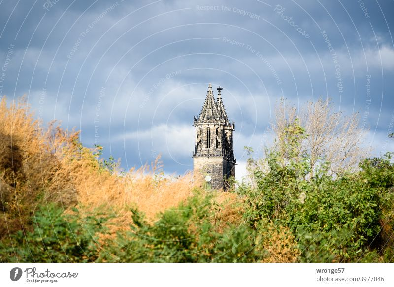Die beiden Türme des Magdeburger Dom's recken sich hinter einem mit wüsten Gestrüpp bewachsenen Hügel in den wolkenverhangenen Himmel Domtürme Sakralbau