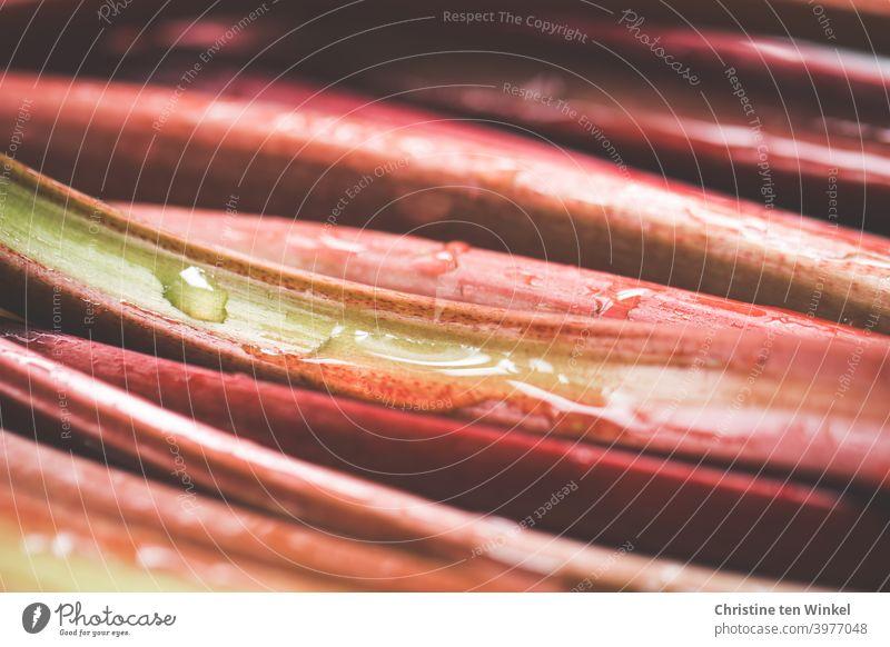 Rote gewaschene Rhabarberstangen liegen nah nebeneinander, Nahaufnahme mit schwacher Tiefenschärfe Ernährung Gesunde Ernährung frisch Vegetarische Ernährung