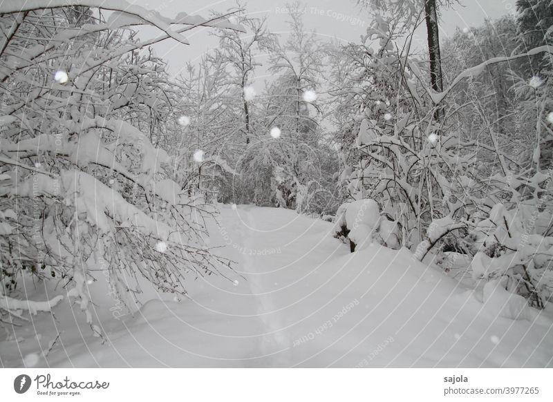 winterlicher Spaziergang unter verschneiten Bäumen Schnee Pfad Schneefall Spaziergang in der Natur weiß Sträucher Schneedecke Spur spuren hinterlassen