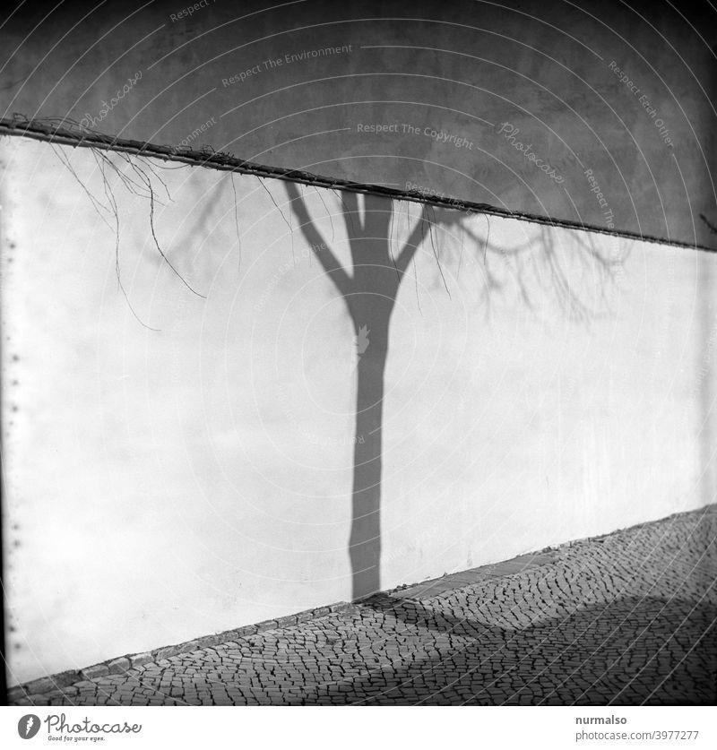 Zusammentreffen analog Kontrast baum Zauberstab Schatten pflasterstein Stadt quadratisch Quadrat Rollfilm Winter Kälte
