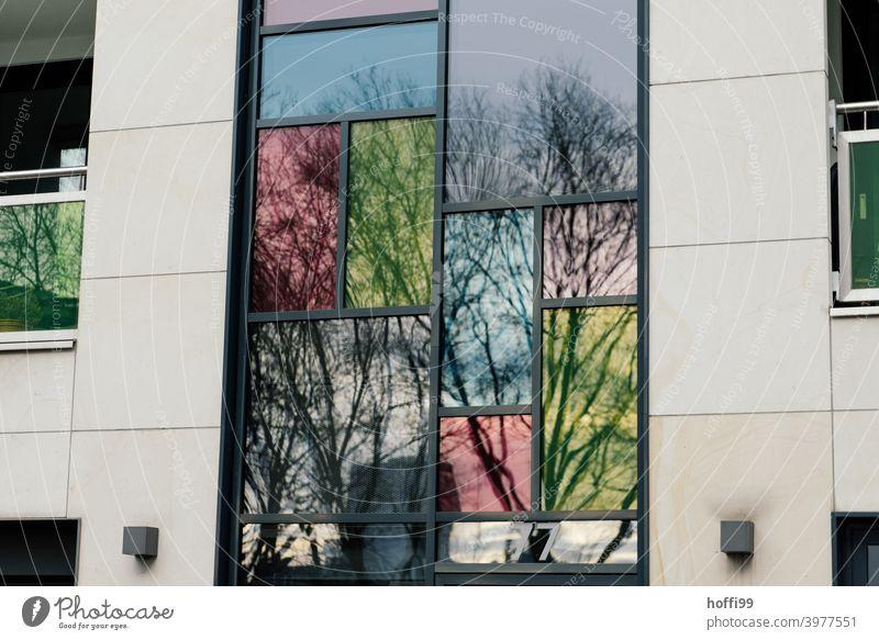 gefärbte Fenster spiegeln die kahlen Bäume in der tristen, urbanen Fassade Farbige Fenster farbig Reflektion Architektur Reflexion & Spiegelung Glas Haus modern