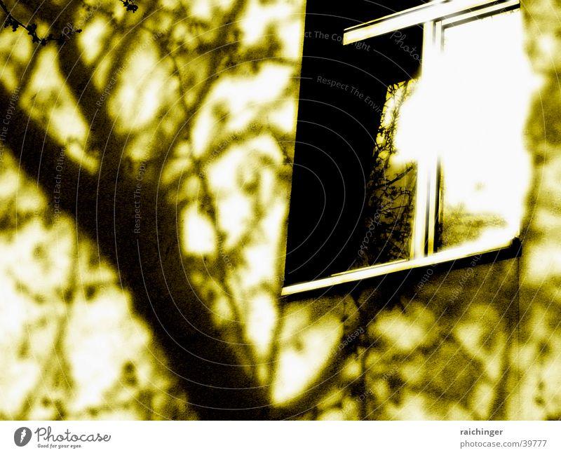 fenster zum hof Fenster Wand Haus Fensterrahmen Licht Häusliches Leben Sonne Reflexion & Spiegelung Fensterscheibe Schatten Sepia