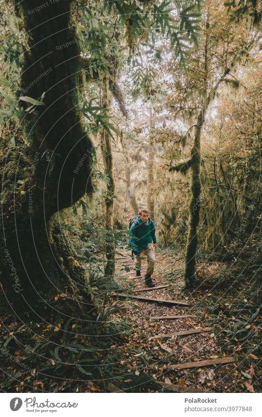 #AS# wanderer Regenwald tropisch Wald Bäume Moos mystisch Dschungel Nebel Abenteuer Menschenleer Natur grün Landschaft natürlich Laubwerk unberührt faszinierend