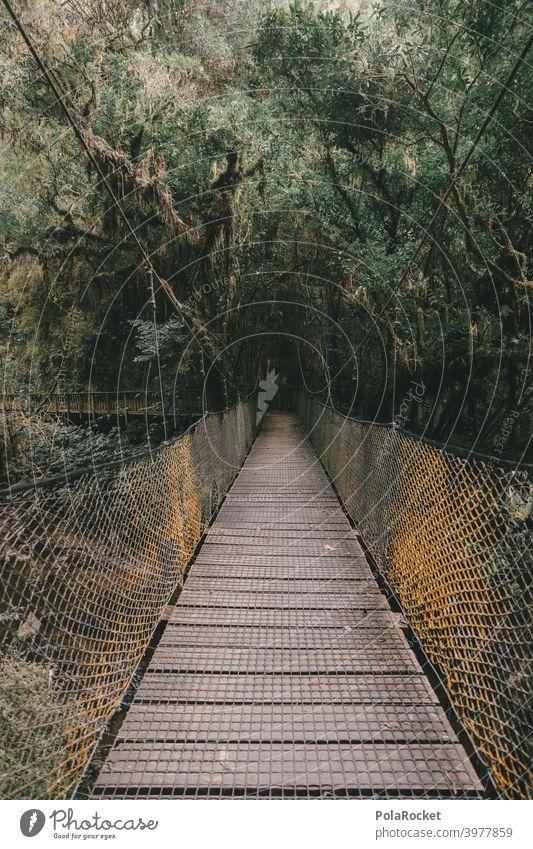 #AS# Hängebrücke für Abenteurer Holz Urwald Urwaldriesen Farn Gräser Moos Abenteuer Natur Außenaufnahme Pflanze Menschenleer Neuseeland Farne Wege & Pfade