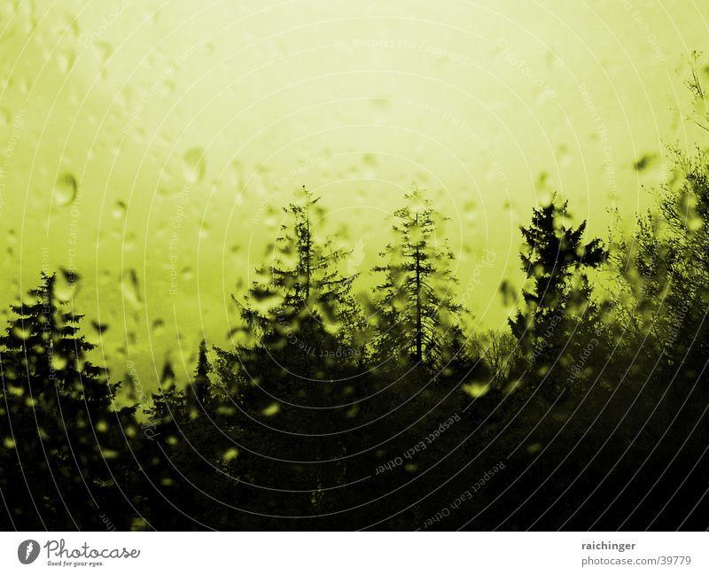 rainy day Baum Fenster Regen Glas Wassertropfen Fensterscheibe mystisch Verzerrung spukhaft