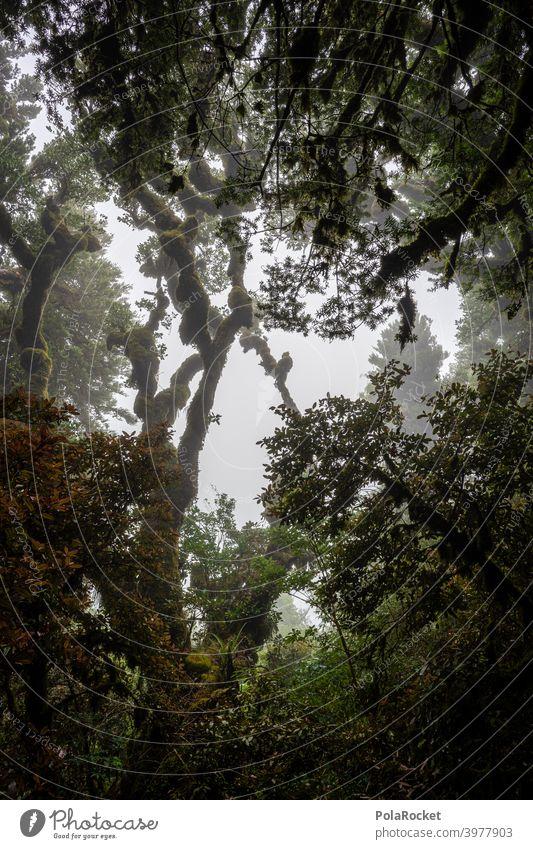 #AS# Eine andere Welt Regenwald tropisch Wald Bäume Moos mystisch Dschungel Nebel Abenteuer Menschenleer Natur grün Landschaft natürlich Laubwerk unberührt