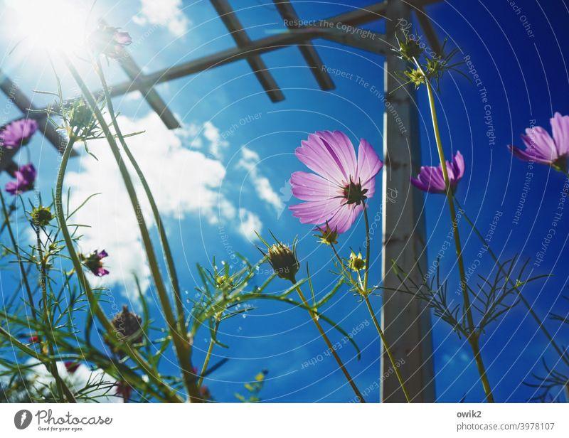Zukunftsaussichten Pergola Mast Holz Bewegung Blume Pflanze Himmel Landschaft Natur Umwelt Sonne Sommer Wolken Schönes Wetter Blüte Wildpflanze Sträucher