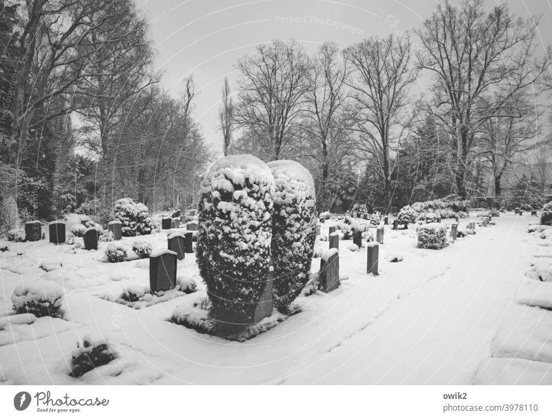 Stille Gräber Trauer Tod Tost Winter Kälte Umwelt Natur Landschaft friedlich Textfreiraum rechts Panorama (Aussicht) Schönes Wetter trösten Friedhof Frost Eis