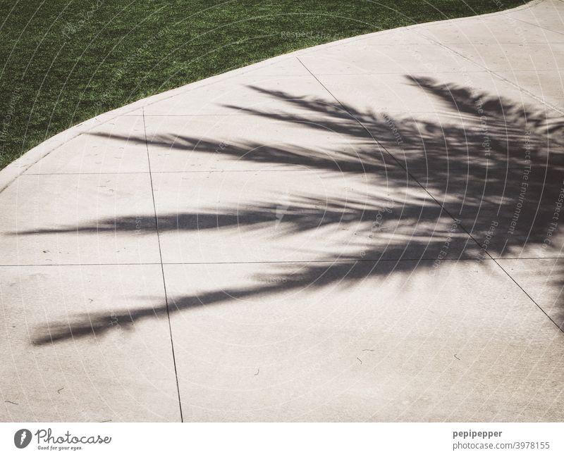 Schatten einer Palme Palmenwedel Schwimmen & Baden Ferien & Urlaub & Reisen Sommer Tourismus Reflexion & Spiegelung Sommerurlaub Farbfoto Außenaufnahme