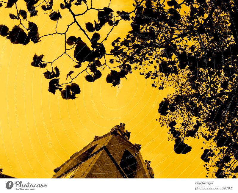 himmel über wien Baum Blatt dramatisch Himmel Turm Ast Zweig