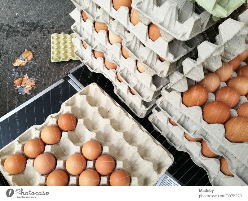 Braune Eier vom Biobauern in großen Pappkartons auf dem Wochenmarkt in Detmold im Lipperland am Teutoburger Wald in Ostwestfalen-Lippe Bauer Hühnerei Karon