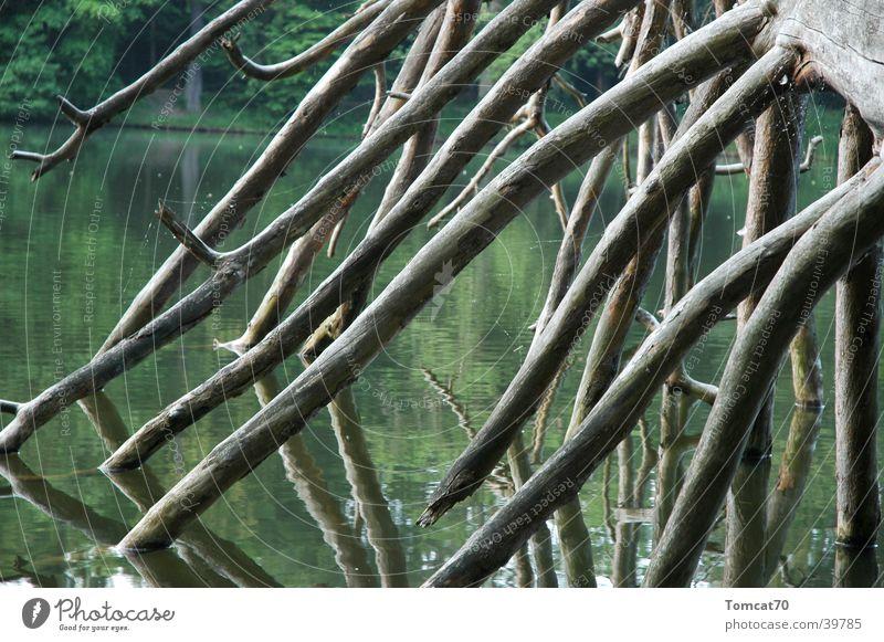 Astgeweih Baum
