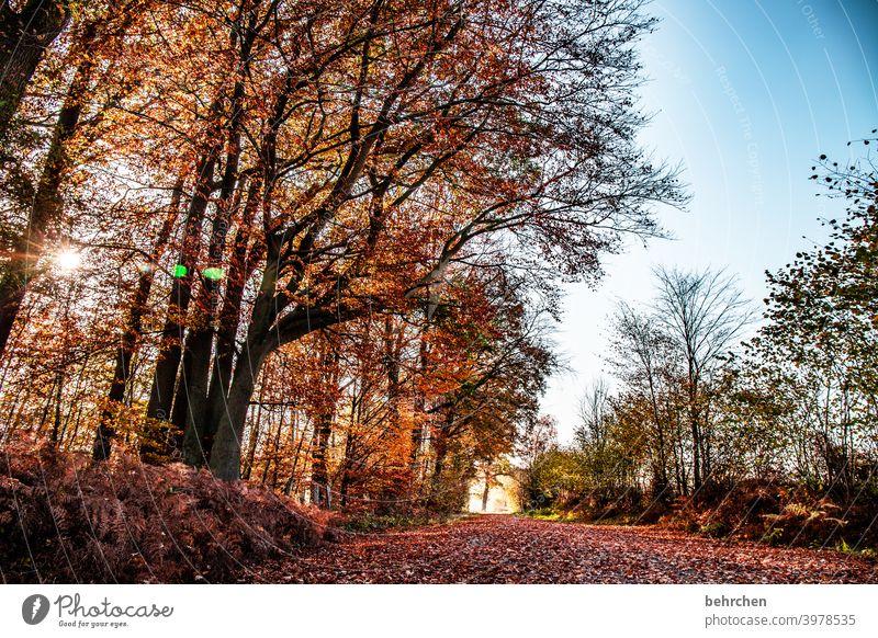 SONN(enherbst)TAG Herbstlandschaft Herbstwetter Blätter Herbstwald Sonnenstrahlen herbstspaziergang Himmel Blauer Himmel Idylle Herbstfärbung ruhig
