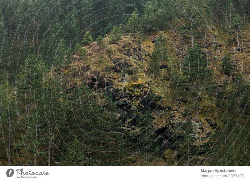 Blick auf den Wald an der Bergseite Abenteuer alpin Herbst Hintergrund schön kalt Morgendämmerung Umwelt Europa Immergrün erkunden Forstwirtschaft Grün wandern