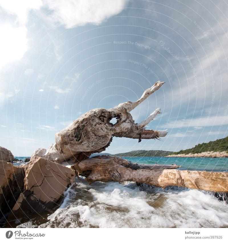 croatia, you are so horny! Freizeit & Hobby Umwelt Natur Landschaft Wasser Wolken Horizont Sonne Sonnenlicht Sommer Pflanze Baum Hügel Wellen Küste Bucht Meer