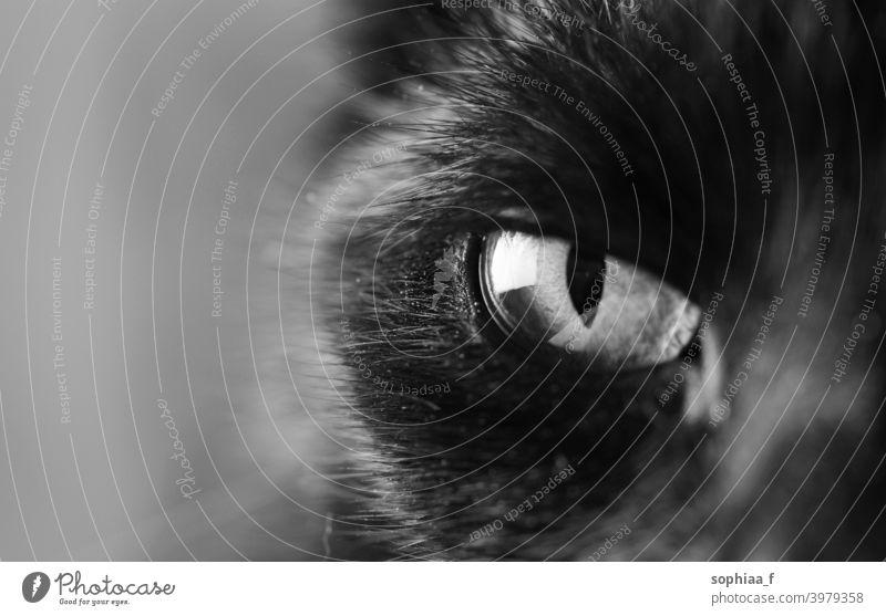 Schwarz-Weiß-Nahaufnahme von Katzenauge, Auge einer schwarzen Katze, die Sie beobachtet schwarz auf weiß Sie beobachten Fokus abschließen Pupille Regenbogenhaut