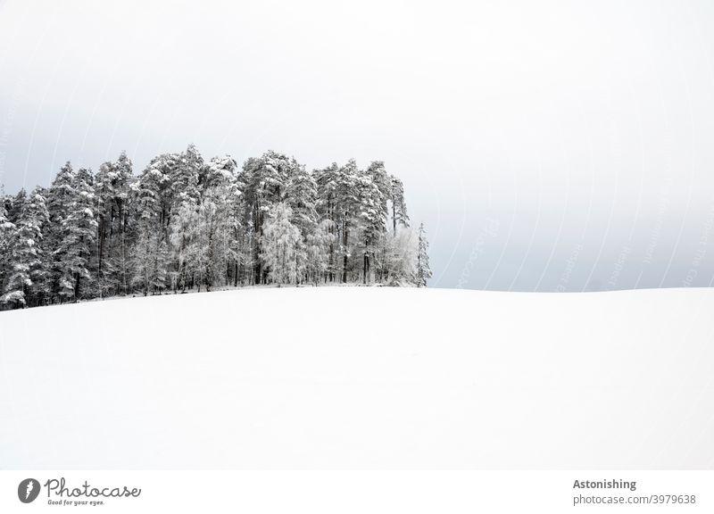 halber Winterwald am Horizont Schnee Hügel Mühlviertel Wald Wiese weiß Nadelwald Nadelbäume Schneefall Himmel Wolken Natur Landschaft Linie Winterlandschaft