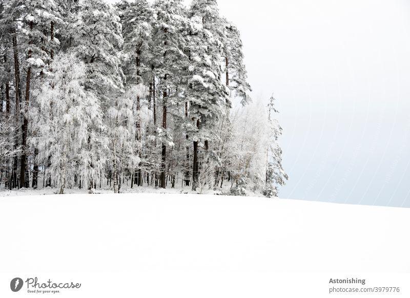 Waldrand auf einem Hügel im Winter Winterwald Schnee Mühlviertel Wiese weiß Horizont Nadelwald Nadelbäume Schneefall Himmel Wolken Natur Landschaft Linie
