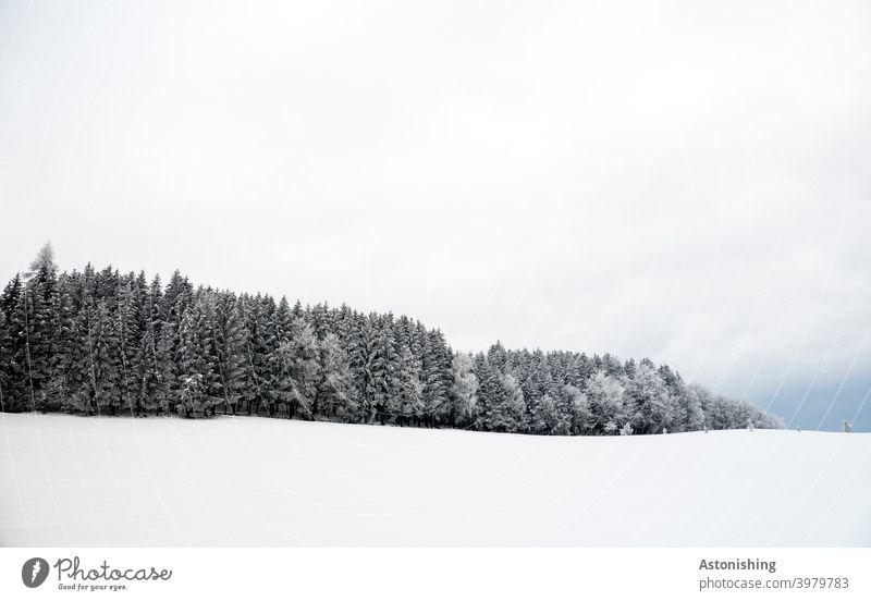 Winterwald am Horizont Schnee Hügel Mühlviertel Wald Wiese weiß Nadelwald Nadelbäume Schneefall Himmel Wolken Natur Landschaft Linie Winterlandschaft kalt Kälte