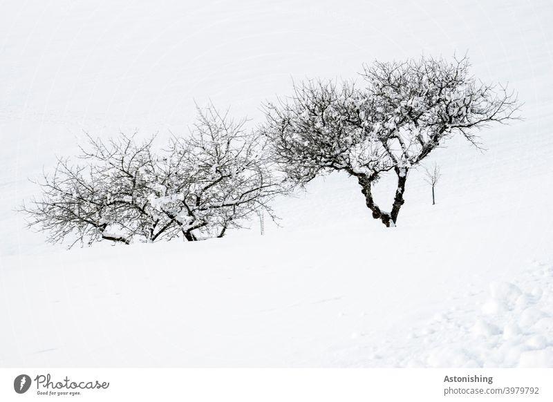 Bäume im Schnee Apfelbaum Winter Zweige Baumstamm Äste Rinde Landschaft Natur Jahreszeit weiß schwarz Außenaufnahme Zweige u. Äste Menschenleer Umwelt Pflanze