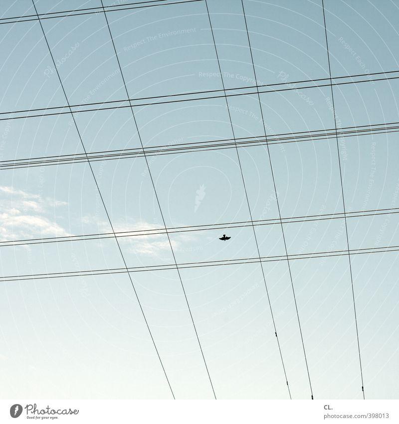 flugplan Umwelt Natur Himmel Wolken Schönes Wetter Luftverkehr Vogel Flügel 1 Tier fliegen Unendlichkeit einzigartig Einsamkeit Platzangst gefährlich Freiheit