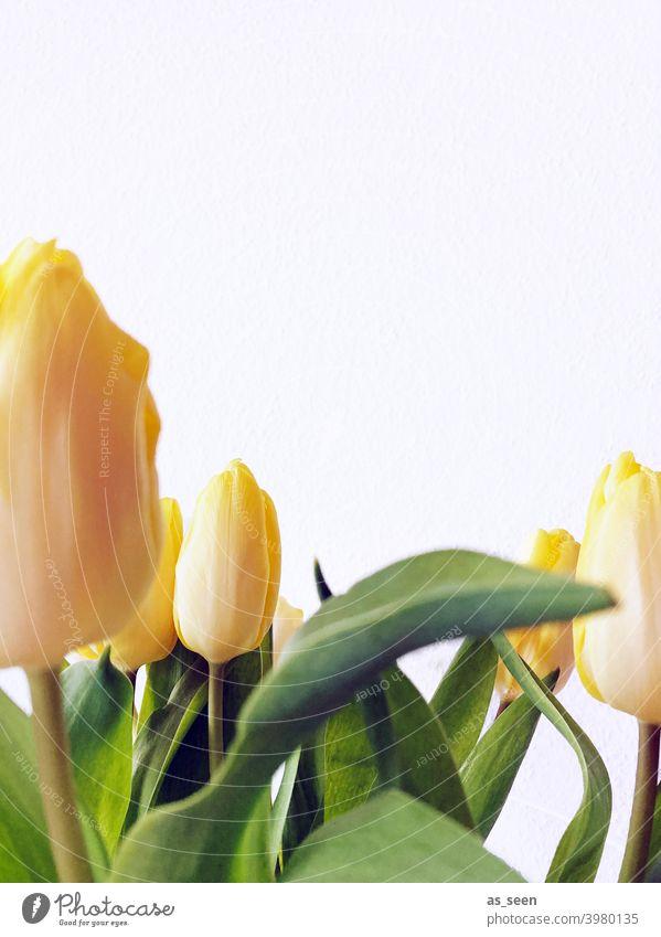 Gelbe Tulpen gelb Frühling Blätter Blüten Blume grün Pflanze Natur Blumenstrauß schön Farbfoto Nahaufnahme Dekoration & Verzierung Blühend Textfreiraum oben