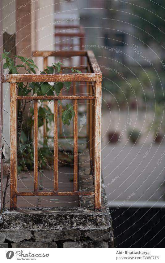 Kleine Grünpflanze auf einem verlassenen Balkon mit rostigem Eisengitter-Geländer. Pflanze grün Verlassen Unschärfe Rust Grillrost bügeln klein Metall