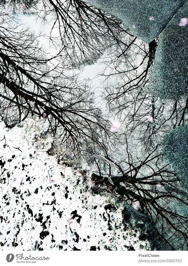 Spiegelung in einer Pfütze Bäume Wald Natur Menschenleer Winter Außenaufnahme Schnee kalt Winterwald Baum Frost Wintertag Spiegelung im Wasser Winterstimmung