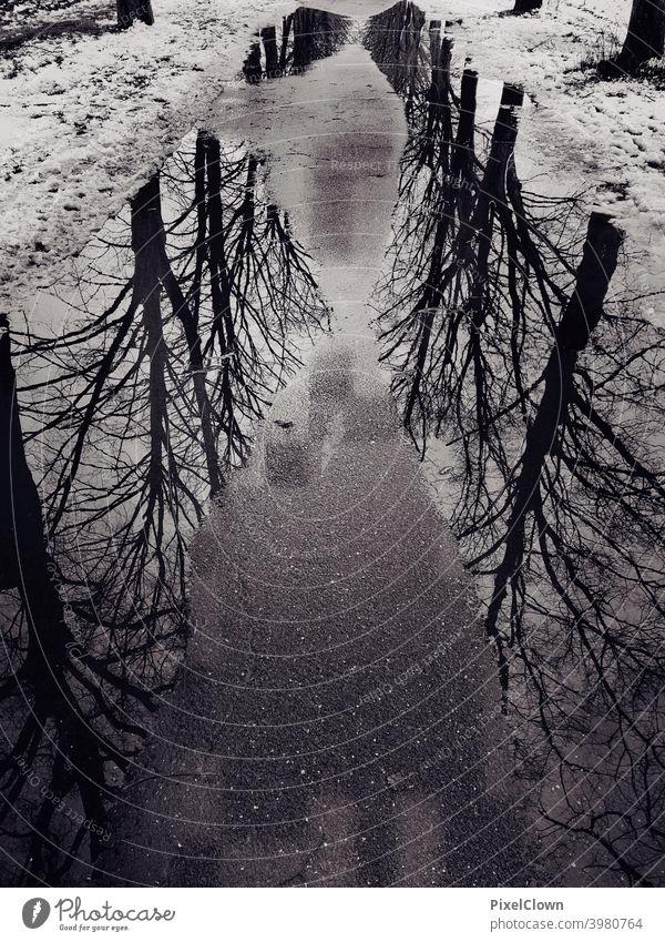 Ein Pfütze auf einem Spazierweg mit spiegelnden Bäumen darin Pfützenspiegelung Reflexion & Spiegelung Außenaufnahme Wasser Asphalt Regen baum Baum Wetter