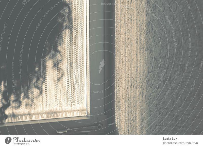 Eine Frau steht in einem Treppenhaus vor einem Fenster mit altmodischer Gardine. Im Gegenlicht ihre langen, lockigen Haare. wild Sonnenlicht Farbfoto Tag