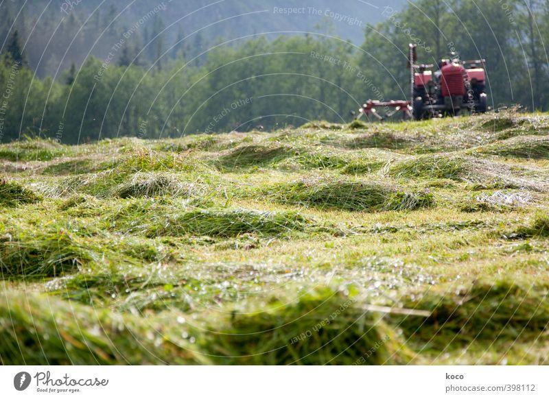 Heu machen Natur blau grün Sommer rot Erholung Landschaft schwarz Wald Umwelt Wiese Wärme Gras Feld Idylle Tourismus