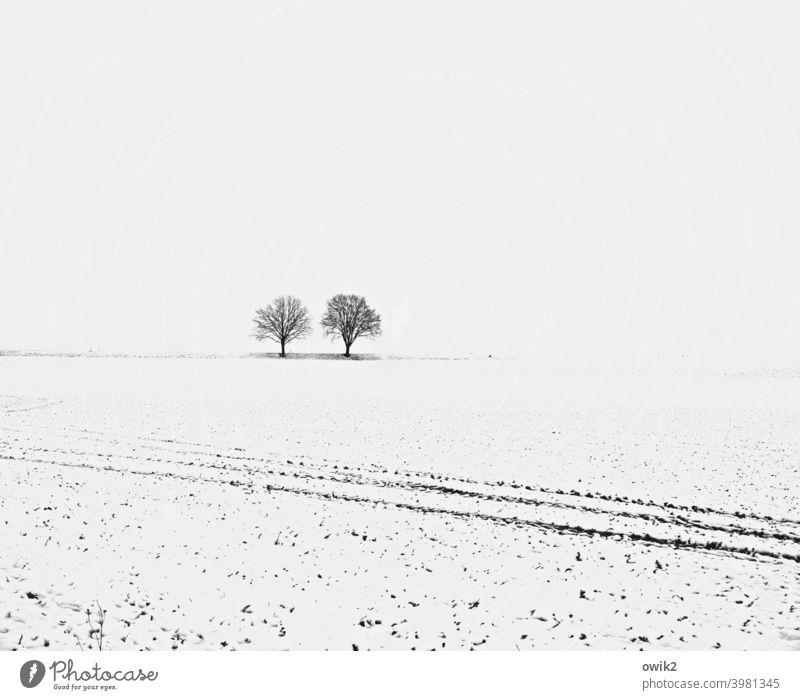 Runter vom Acker! karg weiß Schönes Wetter kalt Baum Winterstimmung Schneelandschaft Ferne Umwelt Natur Landschaft Himmel verschneit Weite Horizont kühl