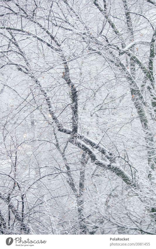 #A0# Winterwald Winterstimmung Wintertag winterlich Winterlicht Bäume Äste Schnee schneetreiben