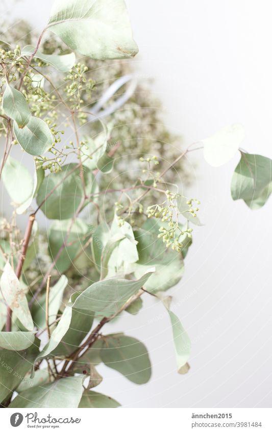 Vorne im Bild ist ein Strauß getrockneter Eukalyptus, hinten sieht man unscharf einen Kranz aus weißem schleierkraut Trockenblumen grün kranz weiss Blume
