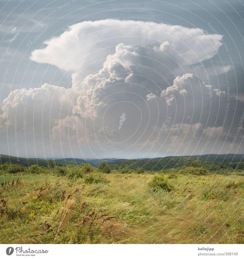amboss Natur Pflanze Landschaft Tier Wald Umwelt Luft Wetter Klima bedrohlich Hügel Unwetter Grasland Gewitterwolken gewaltig Serbien