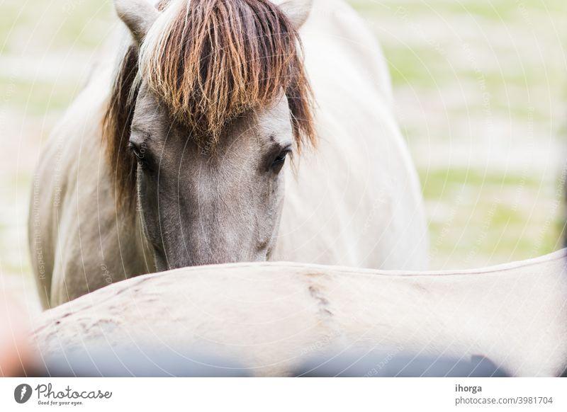 Porträt von Pferdeplanen auf der Außenseite Tier Tiere Hintergrund schön Schönheit züchten caballus Nahaufnahme Farbe Erhaltung niedlich Reiterin pferdeähnlich
