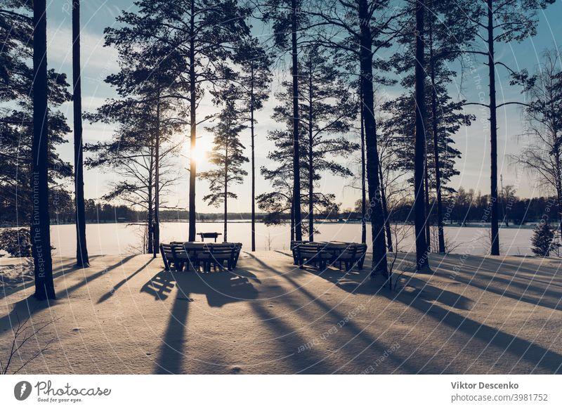 Kiefernwald am See an einem sonnigen Wintertag Europa Januar Tanne Feiertag Weihnachten Licht Schilfrohr Wanderung Lettland Waldsee Windstille weiße Farbe