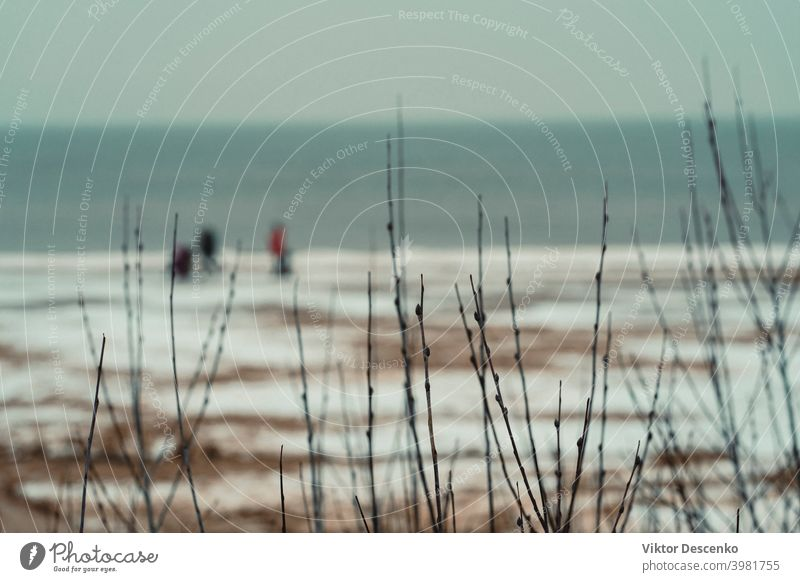 Spaziergang entlang des Ostseestrandes im Januar Kunst Europäer Kunstwerk Wald Baum Sandstrand Winterstrand Eissand Sand Eis Schnee laufen Ufer Horizont Nebel