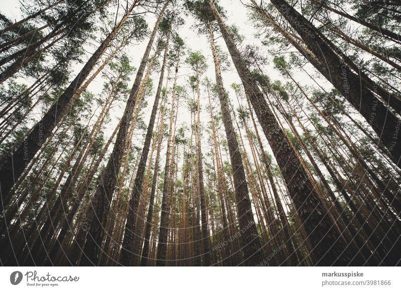 Wald Baumspitze Weitwinkel Lebensalter Axt Hintergrund Brandwunde Bauholz Aushärten geschnitten trocknen Energie Feuer Brennholz Forstwirtschaft Hartholz Haufen