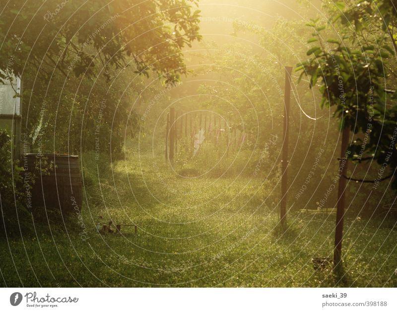 still in dreams Natur Landschaft Sommer Pflanze Gras Garten Wiese ästhetisch Freundlichkeit schön braun grün Gefühle Stimmung Zufriedenheit Geborgenheit