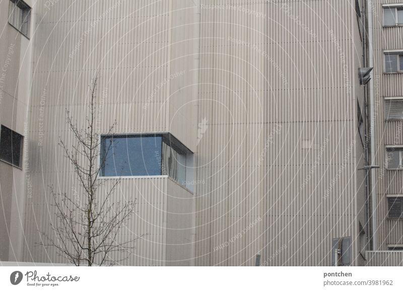 Architektur. Eine hausfassade mit kahlem baum. Tristesse gebäude tristesse Baum fenster