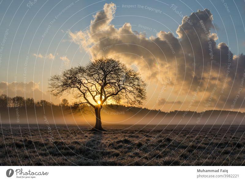 Eine schöne Natur einsamer Baum und Wolken Landschaft mit Sonnenuntergang Sonnenlicht Sonnenaufgang Licht Himmel Farbfoto Gegenlicht Abend Umwelt Schatten