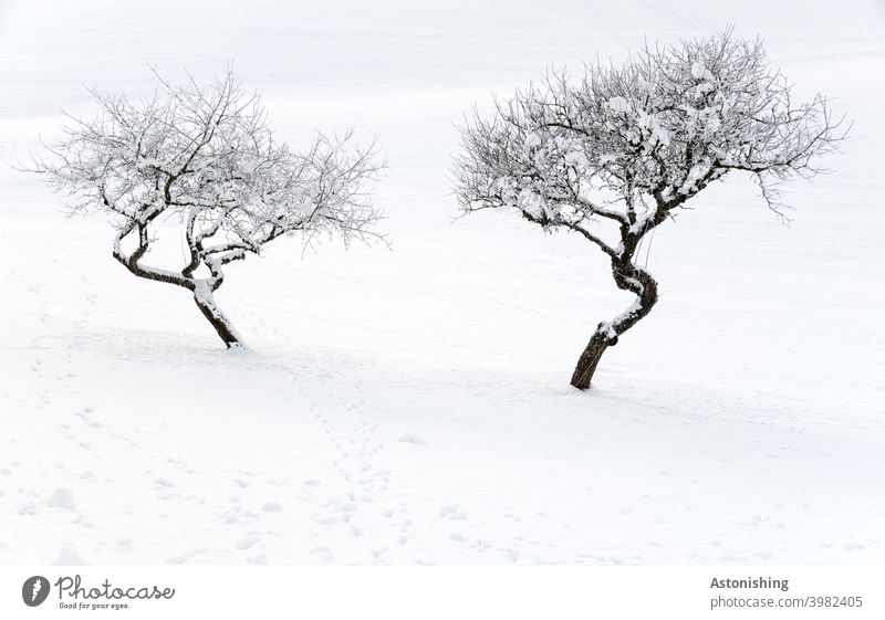 zwei eingeschneite Bäume beäugen sich skeptisch 2 Natur Winter Landschaft Kurve Baum Schnee weiß Baumkrone Zweige Äste Hügel Winterlandschaft Schneedecke Spur