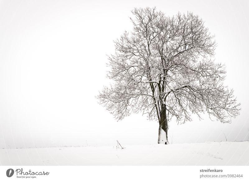 Einsamer kahler Baum auf verschneitem Feld Schnee Winter kalt Außenaufnahme weiß Menschenleer grau Landschaft Natur Farbfoto Tag ruhig Nebel Frost