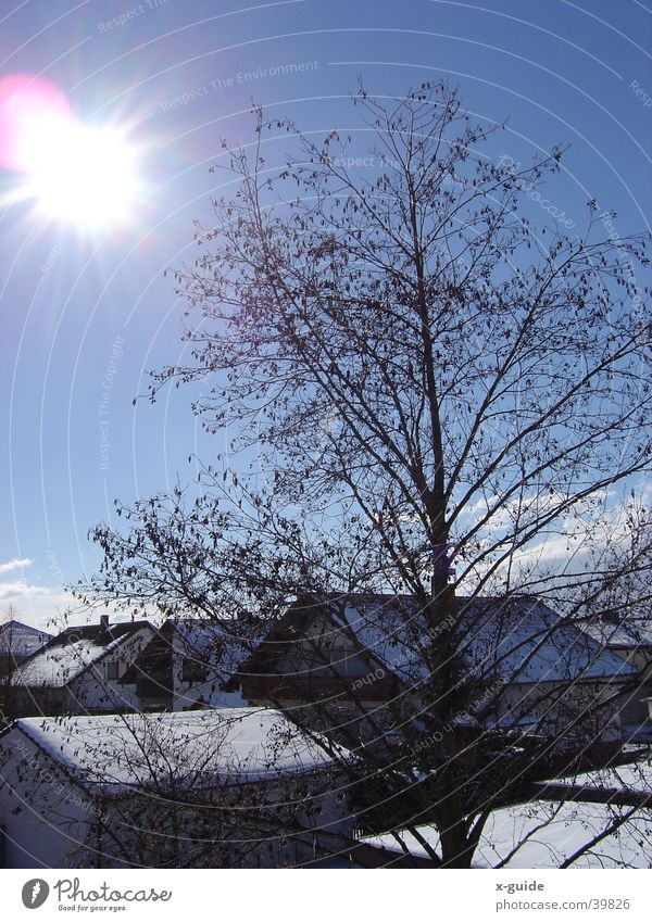 Sonnenstrahlen im Winter Himmel weiß Baum blau Haus Wolken Schnee glänzend Dorf natürlich Freundlichkeit positiv Lichtspiel Wintertag