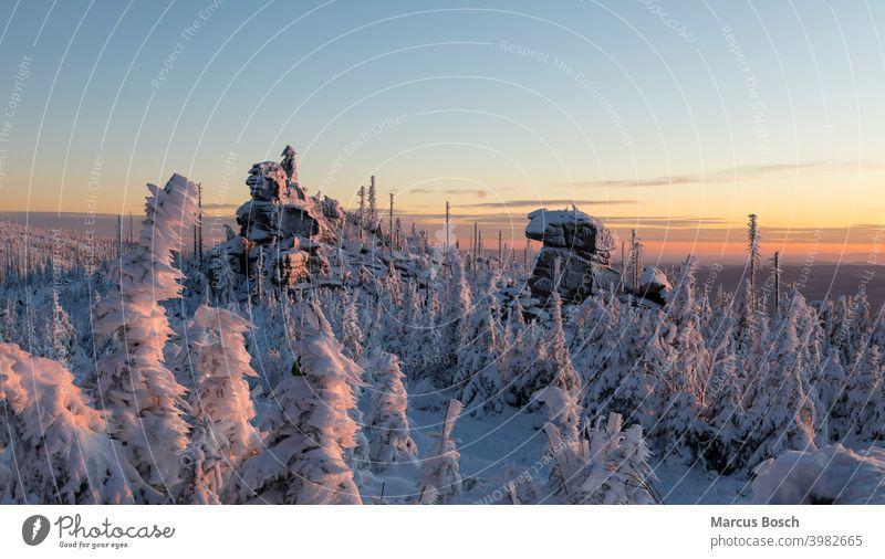 Dreisesselfelsen im Abendlicht Felsen Frost Gipfelfelsen Granitfelsen Himmel Mittelgebirge Mittelgebirgslandschaft Nadelwald Waelder Wald Waldgebiet