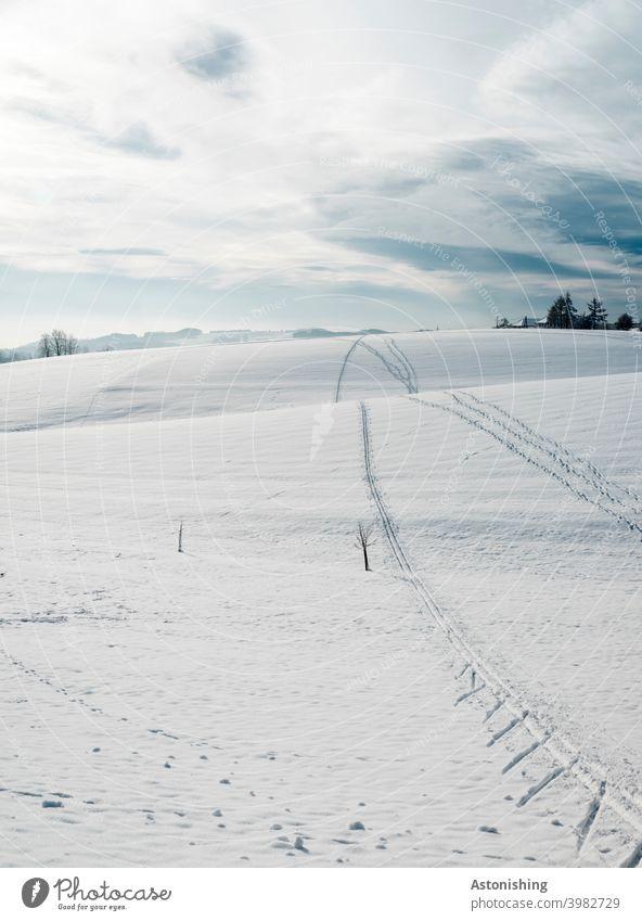 Spuren im Schnee Winter Hügel Hügelland Mühlviertel Schneespuren Horizont Wolken weiß Blau Himmel hinauf hinunter rauf runter Baum Kleinbaum Landschaft Natur